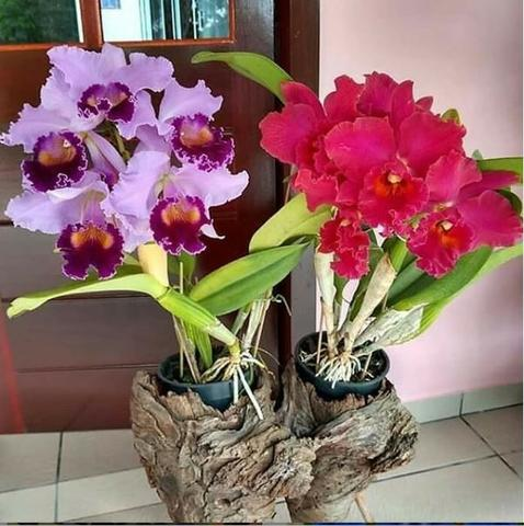 Curso Como Cuidar de Orquídeas + 2 Super bonus