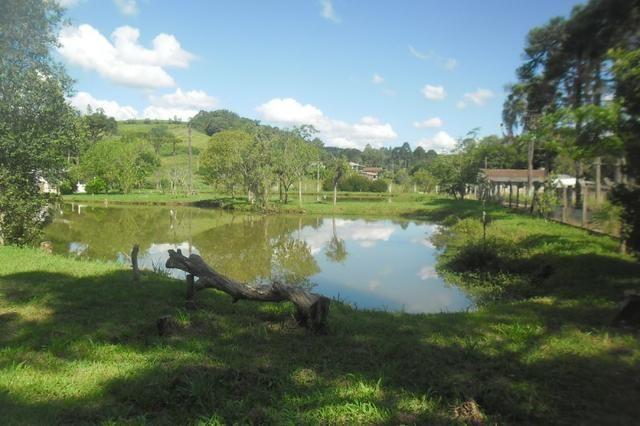 Vende-se chácara em cai de baixo - Quitandinha (cód. A289) - Foto 9
