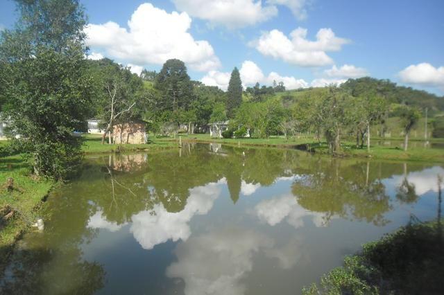 Vende-se chácara em cai de baixo - Quitandinha (cód. A289) - Foto 17