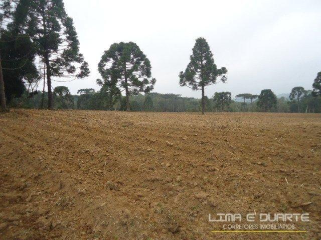 Chácara à venda em Bituvinha, Mafra cod:216CH - Foto 13