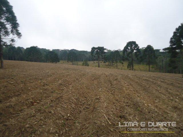 Chácara à venda em Bituvinha, Mafra cod:216CH - Foto 16