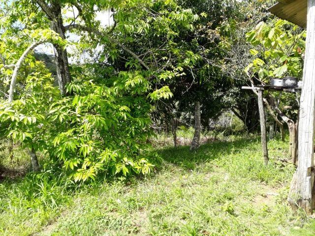 Sítio em Itacaré - Bahia - Foto 12