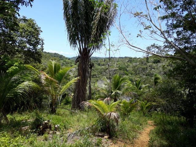 Sítio em Itacaré - Bahia - Foto 8