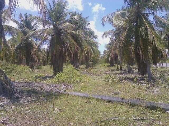 Vendo terreno (1000m²) no Parque Santa Ismênia - Macaíba. - Foto 3