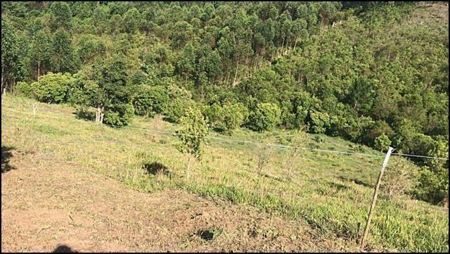 Vendo um lindo terreno de 600m2, próximo há - Foto 3