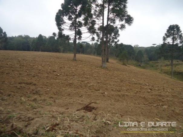 Chácara à venda em Bituvinha, Mafra cod:216CH - Foto 17