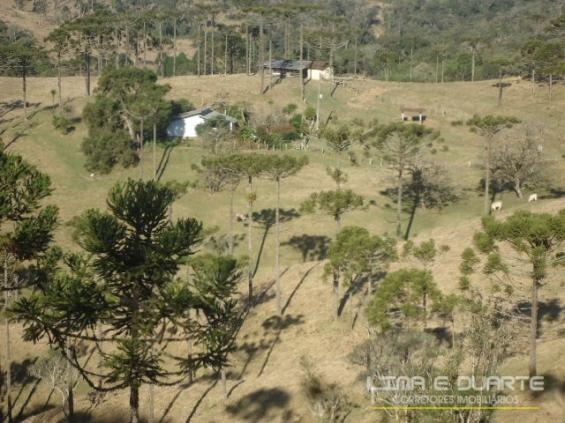 Chácara à venda com 0 dormitórios em Serra alta, São bento do sul cod:194CH - Foto 9