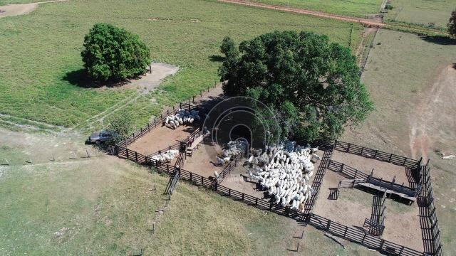 Fazenda para pecuária 185 ha santo antonio leverger - Foto 11