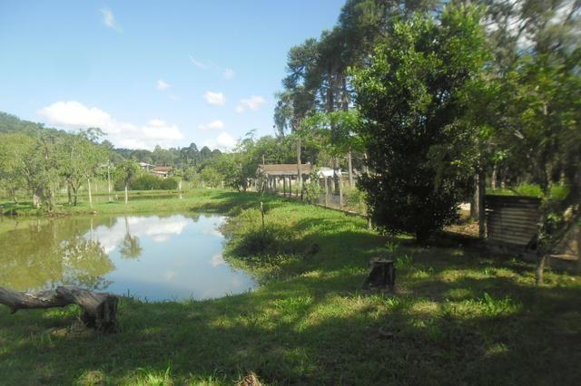 Vende-se chácara em cai de baixo - Quitandinha (cód. A289) - Foto 7