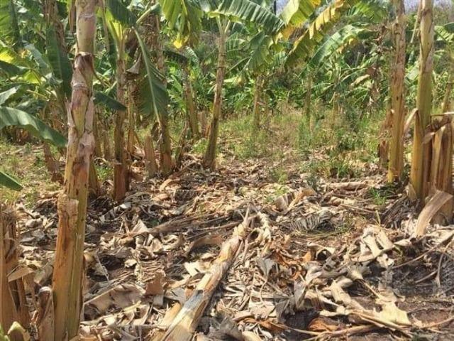 Fazenda de 170 hectares. São Gabriel do Oeste - Foto 4