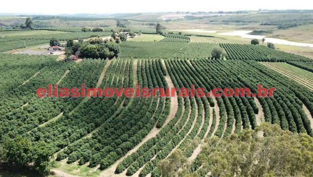 Fazenda de café - 110.000 pés - Patrocínio - MG - Foto 12
