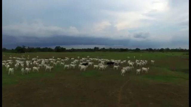 VENDA | Fazenda, em ZONA RURAL, CORUMBÁ - Foto 15