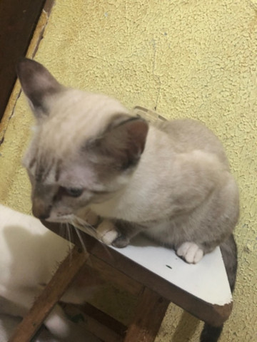 Doa-se lindos gatinhos - Foto 4