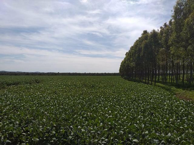 Fazenda para Soja com 6.200 hectares - Foto 6