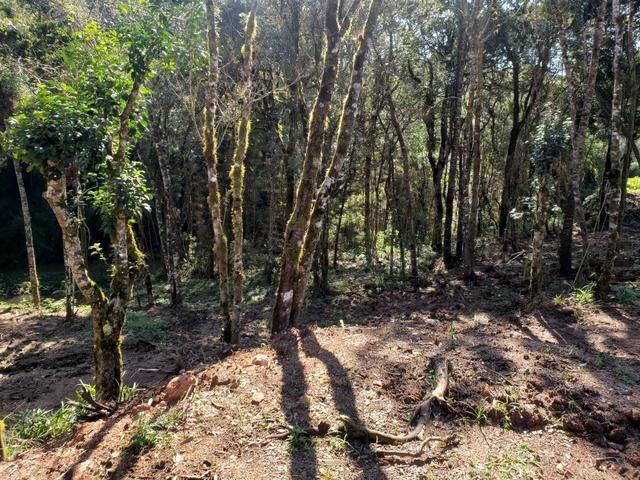 Chácara Agudos do Sul - 50 mts da Br c/ Tanque e rio - Foto 19