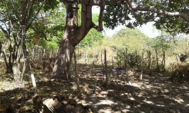 Sítio fundos para lagoa em Caucaia - Foto 8