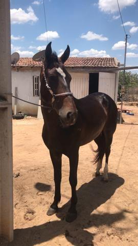 Cavalo mm vendo ou troco por qm