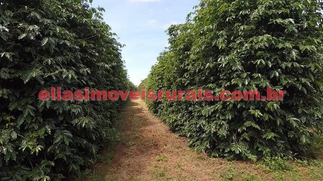 Fazenda de café - 110.000 pés - Patrocínio - MG - Foto 8