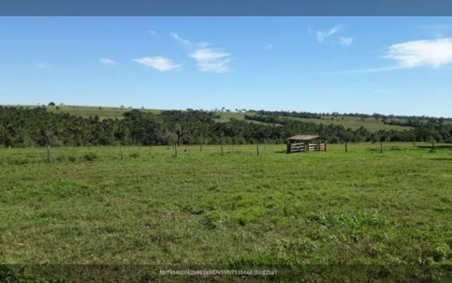 Fazenda município prata - Foto 2