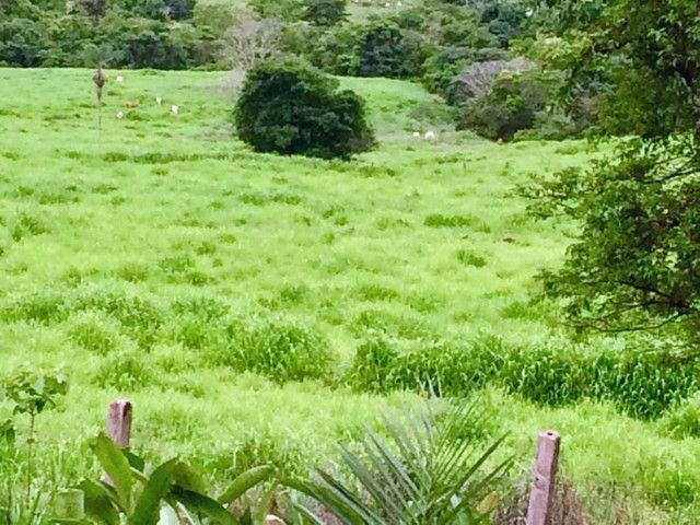 Fazenda 5060 hectares no Marabá Pará - Foto 2