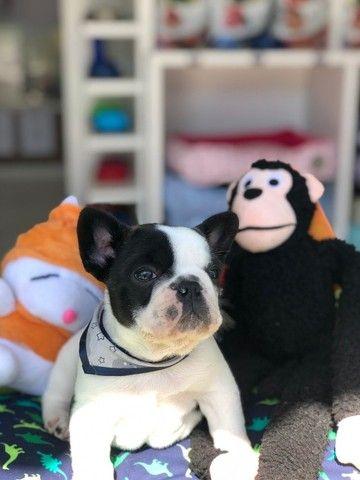 Temos lindos filhotinhos Bulldog!! Confira