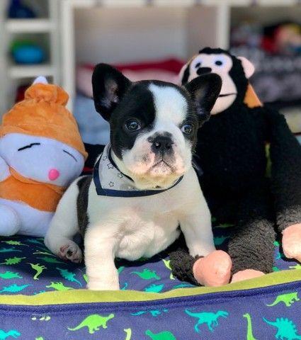 Temos lindos filhotinhos Bulldog!! Confira - Foto 2