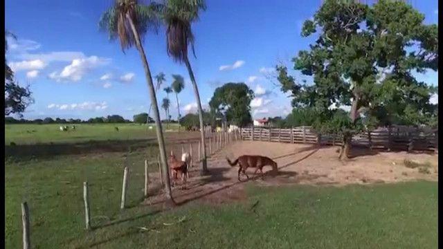 VENDA | Fazenda, em ZONA RURAL, CORUMBÁ - Foto 7