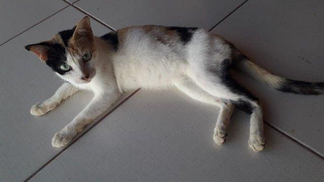 Doação Responsável Gatinha Castrada 5 meses - Foto 2