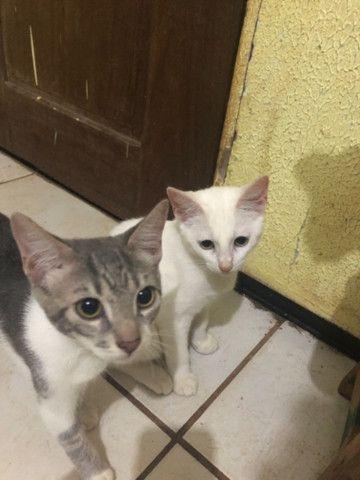Doa-se lindos gatinhos - Foto 2