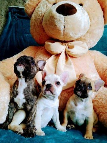 Confira nossos filhotes Bulldog Francês - Foto 4
