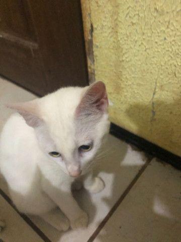 Doa-se lindos gatinhos - Foto 3