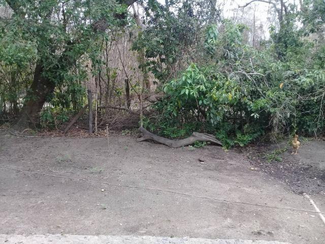 Sítio no bairro Chavão/Santo Antonio, Cabo Frio-RJ. 6.000m² - Foto 15