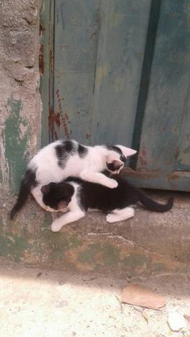 Adote um gatinho de rua - Foto 2