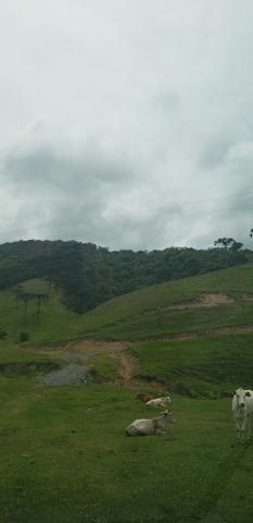 Terreno em Bom Retiro/área rural em Bom Retiro - Foto 6