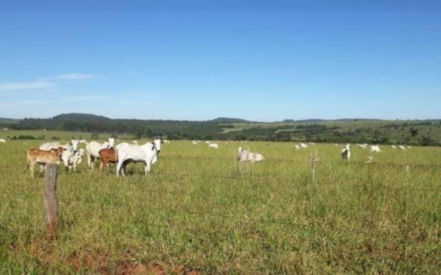 Fazenda município prata - Foto 5
