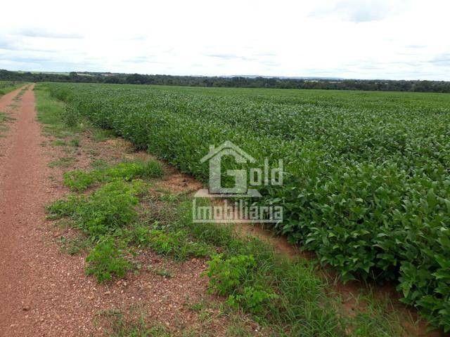Fazenda à venda, 238 hectares por R$ 6.500.000 - Foto 4