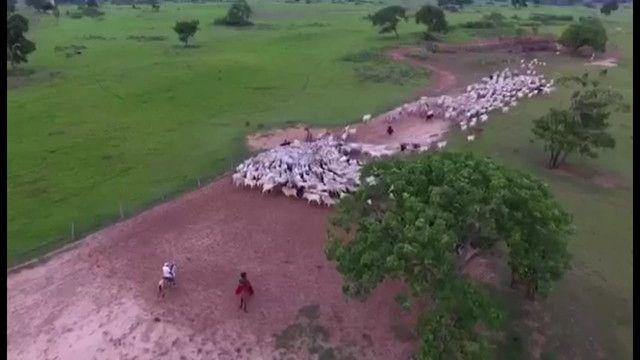 VENDA | Fazenda, em ZONA RURAL, CORUMBÁ - Foto 10