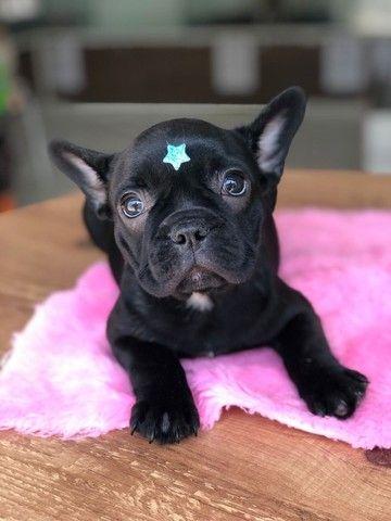 Temos lindos filhotinhos Bulldog!! Confira - Foto 3