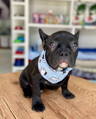 Temos lindos filhotinhos Bulldog!! Confira - Foto 5