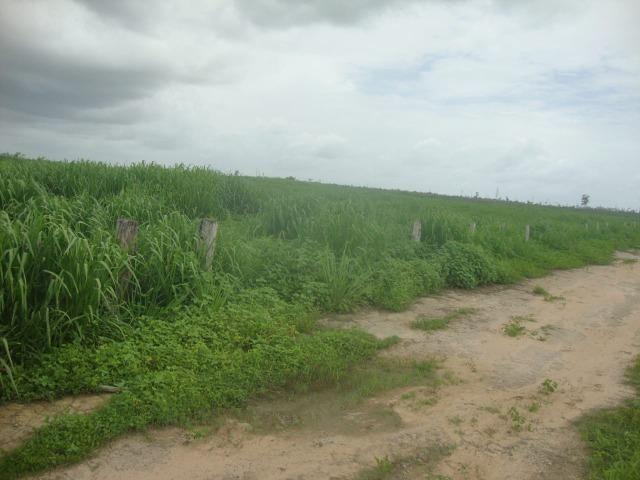 80 km do asfalto, Itinga-MA. 221 alqueires - Foto 6
