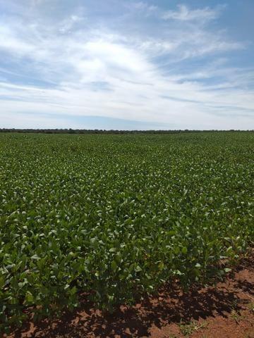 Fazenda para Soja com 6.200 hectares - Foto 7