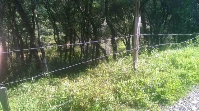 Terreno em Santa Barbara de Ana Reck - Foto 3