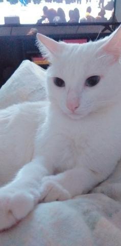 Casal de Gatos para adoção responsável - Foto 3