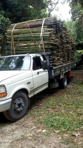 Bambu - Foto 3