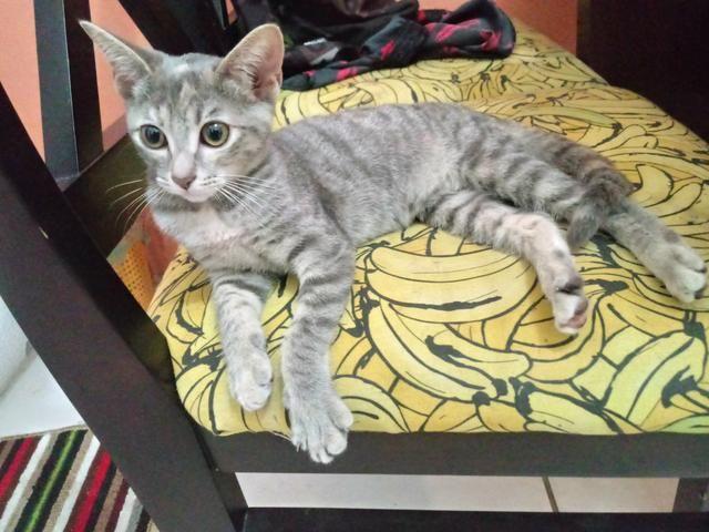 Adoção de Gata 4 meses - Foto 2
