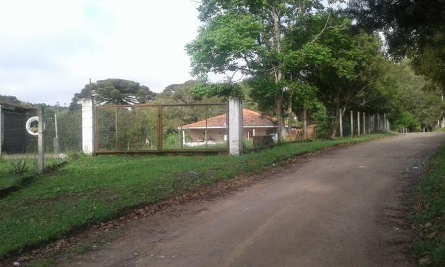 Vende-se chácara em Leão - Agudos do Sul (cód. A349 I) - Foto 7