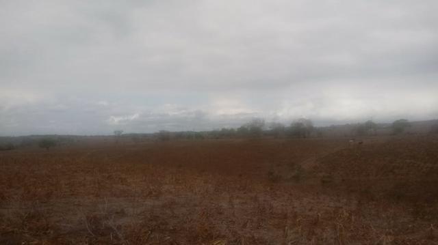 Ótima propriedade de 120 hectares, 70% plana, em Gravatá-PE. Por apenas R$ 780 mil! - Foto 13