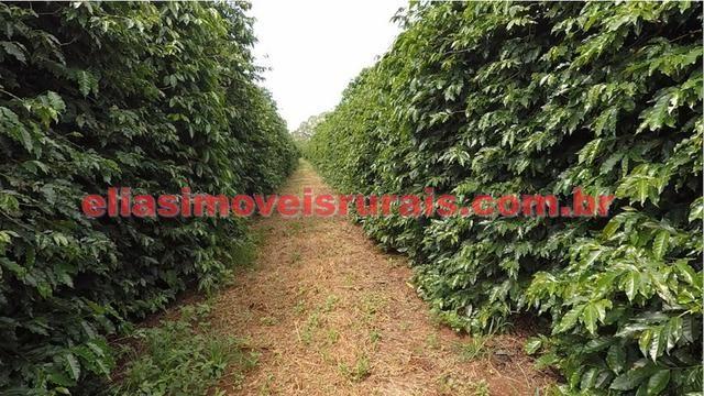 Fazenda de café - 110.000 pés - Patrocínio - MG - Foto 15