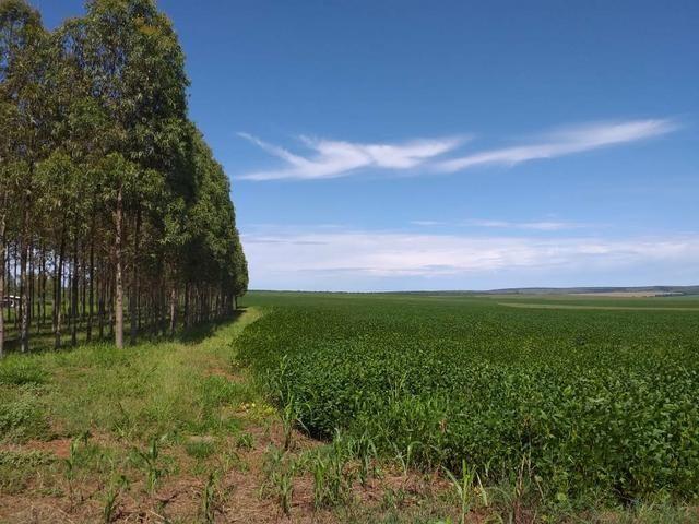 Fazenda para Soja com 6.200 hectares - Foto 3