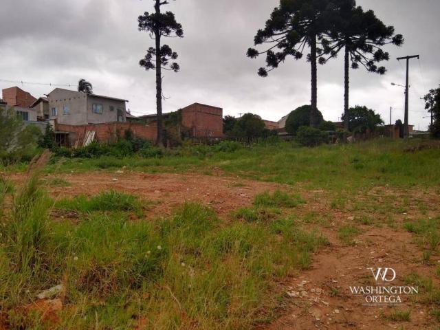 Terreno à venda, 4990 m² por r$ 1.700.000,00 - santo antônio - são josé dos pinhais/pr